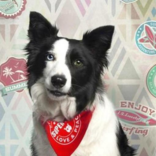 Bandanas para perros Max & Molly