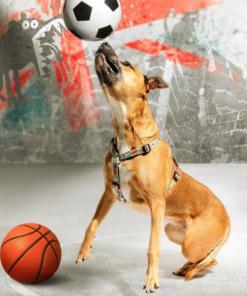 Arneses para perros